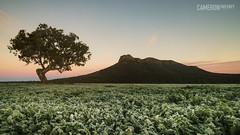 Mt Sturgeon Frost (cameron_sweeney) Tags: au aus australia australian gpt gariwerd grampiansnationalpark grampianspeaktrail landscape mtsturgeon photography samyang samyang14mmf28 sony sonya7r thegrampians timelapse vic victoria wideangle a7r wwwcameronsweeneycomau dunkeld sky fields frost surise moutain tree