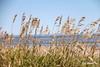 MISCOU ISLAND  |  LANDSCAPE  |  NEW BRUNSWICK  |  NB  |  CANADA (C. C. Gosselin) Tags: miscou island | landscape new brunswick nb canada canon7dmarkii canon 7dmarkii 7d markii mark ii canoneosrebelt2i canoneos7d canon7d eos7d canoneos eos rebel t2i ph:camera=canon