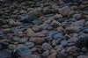 Beach pebble (frankmh) Tags: stone pebble beach hittarp skåne sweden outdoor