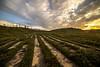 heathlandscape (Foto_Art_) Tags: path uk countryside heathland common samyang 14mm 28 nikon d610