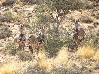 South Africa Hunting Safari - Northern Cape 42