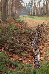 Herfst - Lage Vuursche (mariandeneijs) Tags: bos bomen boom tree trees wood forest utrechtseheuvelrug herfst herbst autumn herfskleuren lagevuursche