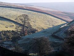 Sunny hillside (Blue Pelican) Tags: hills trees moorfield glossop derbyshire morning november