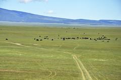 Anglų lietuvių žodynas. Žodis cattle-ranch reiškia n gyvulininkystės ferma lietuviškai.