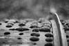 Islands (belleshaw) Tags: blackandwhite roseburg oregon douglascountymuseum nature moss growing islands metal rail curve wood winter wet rain storm detail abstract bokeh