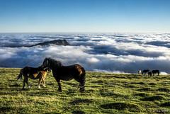 Egunsenti bikaina (Jabi Artaraz) Tags: jabiartaraz gorbea yeguas horses niebla montaña pax paz nature