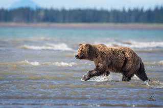 Prowling the Shallows