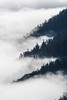 Rising out of the mist (Tim Melling) Tags: cloud mist inversion temperature ocean balang mountain sichuan timmelling china