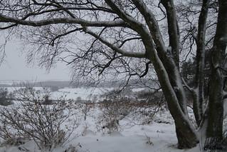 Black and white woodland - Gentleshaw