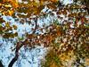 Winter colours (elenaleong) Tags: autumncolours autumnfoliage shanghai china elenaleong
