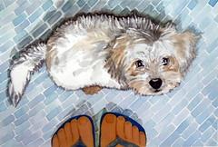 Tapioca, dog, by Naysa - DSC02174-001 (Dona Minúcia) Tags: art painting watercolor study paper animal dog cute buddy friend feet arte pintura aquarela cão cachorro amigo gracinha fofo pés floor chão