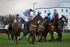 Musselbrugh Races EPMG Nov 2017-6 (Philip Gillespie) Tags: musselburgh scotland edinburgh canon 5dsr races horse riders horses steeple chase hurdles jumps grass trees sky sea leaping jocky jockies mud dirt speed power helmets goggles finish straight flying brush town city clouds winter cold musles hooves hoofs blinkers colour red blue yellow orange green mono black white monochrome men women crowd audience thundering sun sunlight buildings houses people