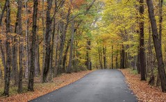 A Road thru Fall (Bernie Kasper (3 million views)) Tags: art berniekasper cliftyfallsstatepark cliftyfalls color d600 effect family fall hiking indiana jeffersoncounty landscape light leaf lily madisonindiana madisonindianacliftyfallsstatepark nature nikon naturephotography new outdoors outdoor old outside photography park raw road red statepark travel tree trees trail yellow