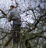 Up In The Tree (M C Smith) Tags: pentax k3ii apple pruning chainsaw man eardefenders sky blue grey orange branches ladder silver trees