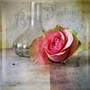 . a single rose . (Kerstin Frank art) Tags: rose vase texture garden stilllife still kerstinfrankart flower