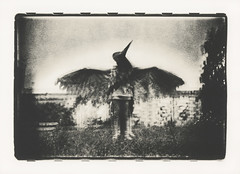 The flight of autumn woodpeckers (Lith-print series) (sergeyvaraksin) Tags: blackandwhite concept art bw analogue film camera surreal street dream analog creative monochrome sepia darkroom child children people kids boy experiment negative portrait lithprint print alternative multi¬exposure doubleexposure bird