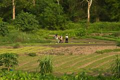 2017_04_26LuangPrabang190 (Andi [アンデイ]) Tags: laos travel travelphotography street streetphotography seasia southeastasia lao newyear savhannaket vientiane vangvieng luangprabang canon sigma sigmaa nature village rural buddhism