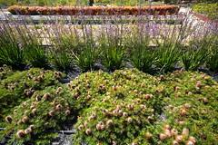 Cranbourne RBG Nov 2017 091 (Graeme Butler) Tags: water landscape history gardens australianplants architecture victoria australia
