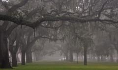 USA - Georgia - Savannah (Harshil.Shah) Tags: savannah georgia united states america usa savannahga spanish moss trees fog park chatham county