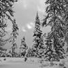 Break in the Storm, Mt. Hood (Scott Withers Photography) Tags: whiterivercanyon mthood oregon sonya7rii sonyfe2470mmf28gm
