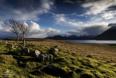 I'm still standing. (lawrencecornell25) Tags: landscape skye isleofskye scenery scotland nature outdoors tree countryside nikond5 braes