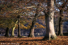 The Garden Of Eden (.Brian Kerr Photography.) Tags: edenvalley eden cumbria landscapephotography landscapes photography armathwaite autumn briankerrphotography briankerrphoto beautifulmorning garden of trees tree autumnal cold frosty morning a7rii availablelight chilly sunlight firstlight sony colours outdoor outdoorphotography opoty onlandscape nature naturallandscape natural forest