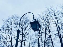 Wieczorny spacer / evening walk im Warsaw (basiamarcisz) Tags: warsaw warszawa łazienkikrólewskie november odbicie reflection mirror dusk zmierzch trees drzewa sky niebo lampa lamp