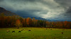 The sweet home (Ping...) Tags: gsmnp greatsmokeymountains fall autumn light tree horse moody clouds field greatsmokeymountainsnationalpark nationalpark