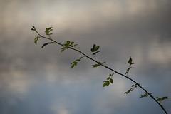 Hostilité (Titole) Tags: ronce reflection titole nicolefaton bramble thorns thorny clouds diagonale