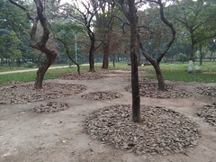 Activity (emon.vq) Tags: art activity liveact landart liveart publicart contemporaryart nature park tree artist muhammadzakir bangladesh
