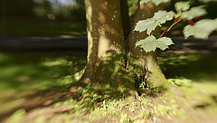 Under the greenwood tree .... (Elisafox22 A bit ON/OFF at the moment!) Tags: elisafox22 sony nex6 lensbaby sweet50 lens composerpro woods texturaltuesday htt leaves sweet50optic bokeh htmt sunlight treemendoustuesday shadows grass trees moss treetrunk green quiet still outdoors fyvie fyviecastle aberdeenshire scotland shakespeare song asyoulikeit quote elisaliddell©2017