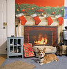 There. I decorated. (Corgibird) Tags: christmashumor decorations holiday holidaydecorations corgi presents fireplace cozy holly garland