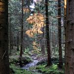 Herbstleuchten thumbnail