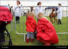 The English IMG_5726 North Devon Show (Trevor Durritt) Tags: candid ©trevordurritt canoneos600d people theenglish canonefs24mmf28stm northdevonshow devon england pancake farming animals agriculture dslr alpaca red
