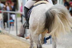 _MG_6350 (dreiwn) Tags: ridingarena reitturnier reiten reitplatz reitverein reitsport ridingclub equestrian showjumping springreiten horse horseback horseriding horseshow pferdesport pferd pony pferde tamronsp70200f28divcusd