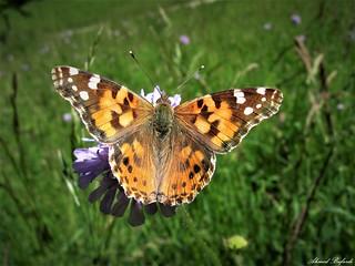 Butterfly 1496