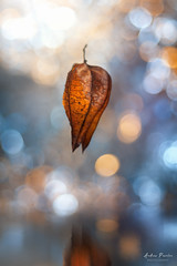 Floating (Pásztor András) Tags: nature floating bokeh reflection bubble dof sigma 105mm f28 dslr nikon d700 hungary andras pasztor photography 2017