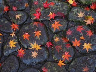 Raining Day in Autumn