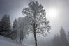 Near the fog border... (dam.he) Tags: schnee nebel landschaft cantonoflucerne switzerland innerschweiz bäume trees frosty pentax kantonluzern schweiz rigi centralswitzerland zentralschweiz k3 fog winter landscape gefroren da15limited