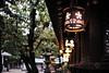 Osaka Tenmangu Shrine Lanterns (petrwag) Tags: sony a6500 sigma30mmf14 japan japón japon nihon nippon clickcamera bokeh osaka