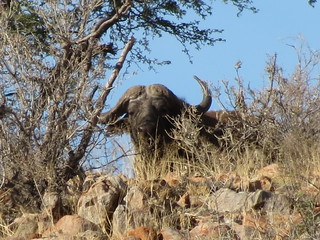 South Africa Hunting Safari - Northern Cape 43