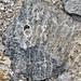 Fossil coral (Florida, USA) 2