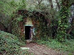 Photo of Shelter in the woods