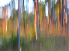 Sunset light (evisdotter) Tags: sunset light trees evening colors nature sooc intentionalcameramovement icm forest autumn