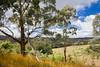 Australia Hike (Lauren Eve Photography) Tags: wildlifephotography albertaphotography banffphotography peytolake emeraldlake abrahamlake lindalake lakeohara vermilionlake banffalberta wolfphoto wolf fox bear grizzly elk deer animalphotos lakereflections jasperalberta bowriver bowvalleyphotography landscapephotography canadianlakes rockymountains canadianrockies lensball canoephoto supermoon washingtondc roadphoto tentphoto campingphoto