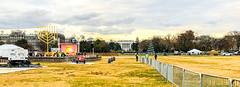 2017.12.12 National Menorah, Washington, DC USA 1372