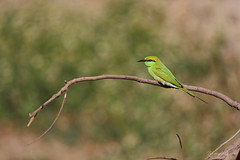 uk 2G6A5104 (uday khatri photography) Tags: amazing art fine india udaykhatriphotography nature indian animal care color canon creative city child bird beautiful birds bulbul bee green eater flying flower full flowers flaying farm fineart wildlife lighte morning micro water white two