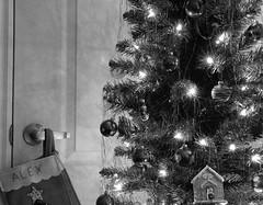 Oh Christmas Tree (Alex Luyckx) Tags: graflex pacemakercrowngraphic crowngraphic largeformat 4x5 presscamera milton ontario canada christmas christmastree holiday condo home schneiderkreuznachsymmars156210 ilford ilfordfp4 fp4 asa100 sp445 kodak kodakd23 d23 stock pentaxspotmeterv epsonv700 adobephotoshopcc bw blackwhite film filmphotography filmisalive believeinfilm filmisnotdead fp4party