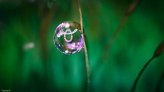 Big Droplet 4086