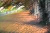 Nature is the art of God. Dante Alighieri (Lorrainemorris) Tags: art sunlight colorful blur forests trees landscape fantasy pastel dream details painting artistic beautiful woods